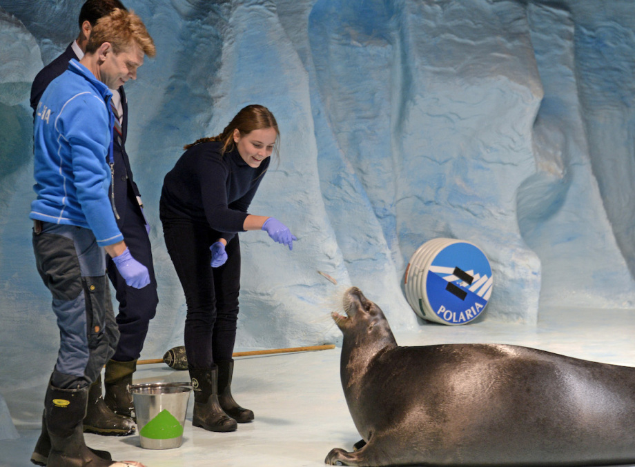 The Princess fed a bearded seal at the Polaria aquarium. Photo: Rune Stoltz Bertinussen / NTB scanpix.