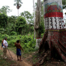 An enormous tree marks the gateway into the village of Demini. The tree was decorated in conjunction with the 20-year anniversary of their their own territory.  (Photo: Rainforest Foundation Norway / ISA Brazil)