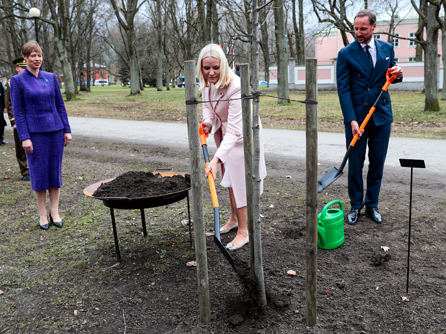 The Crown Prince and Crown Princess planted an oak tree in the park surrounding the Office of the President. Photo: Lise Åserud, NTB scanpix.